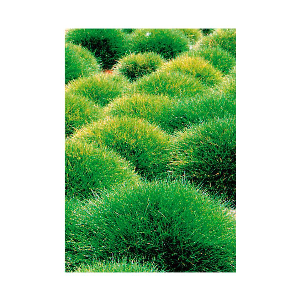 B�renfellgras (3 Stck.)