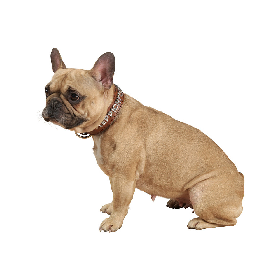 Hunde-Halsband �Teppichflitzer�