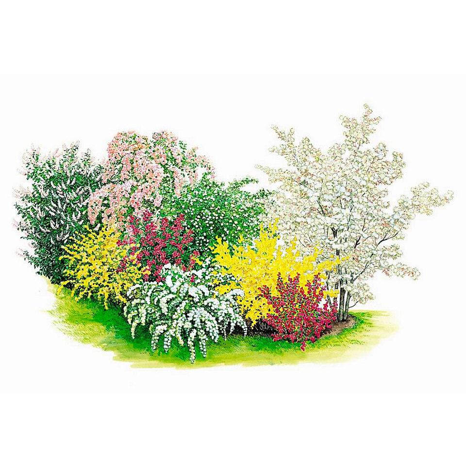 Komplett-Set: Blütensträucher-Hecke