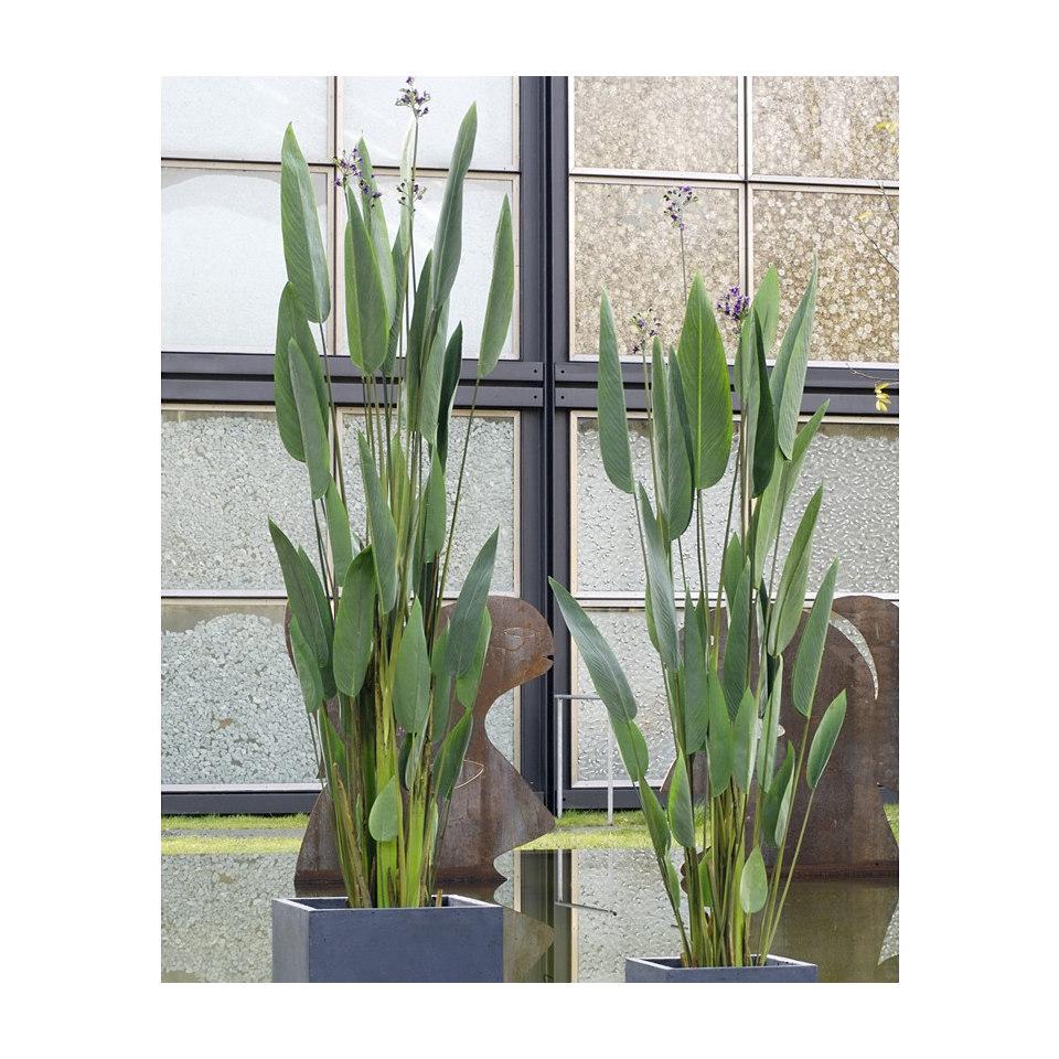 Kunstpflanze Wassercanna