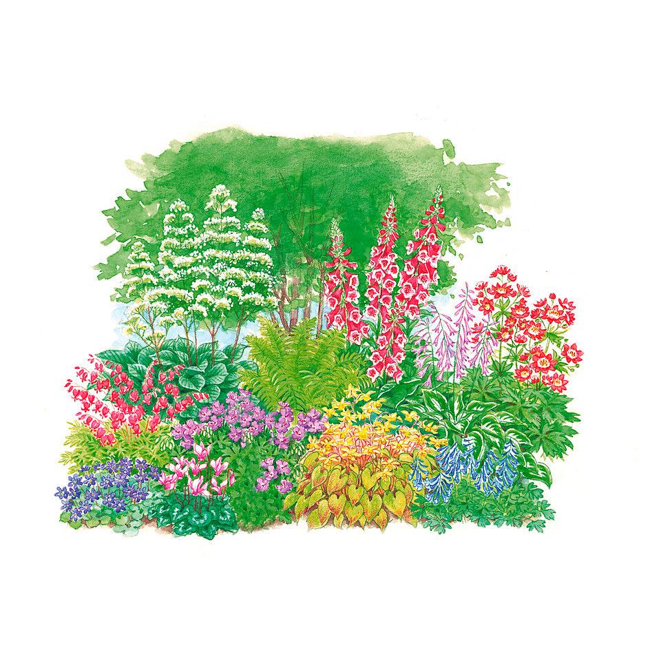 Schattenpflanzen-Set (11-tlg.)